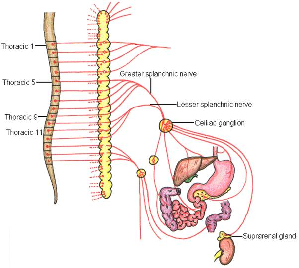 CST and Autonomic Nervous System